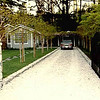 Driveway with 'baby' crepep myrtles