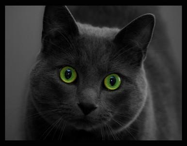eyes8x10