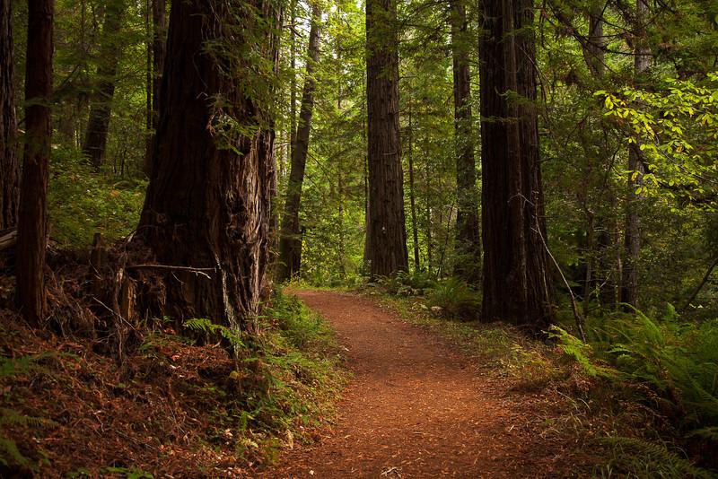 Mendocino, California Oct132012, 4370