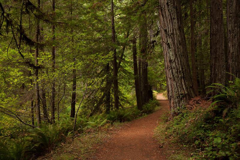 Mendocino, California Oct132012, 4392