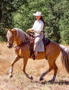 Cal Horse Trader