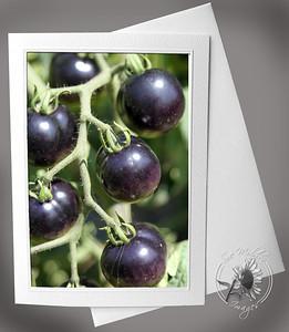 Indigo Rose Tomatoes (2)