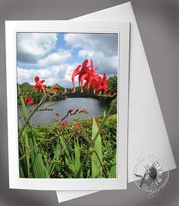 Bridge of Flowers Montbretia