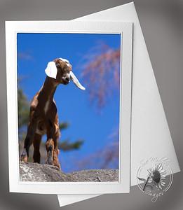 Baby Goat copy
