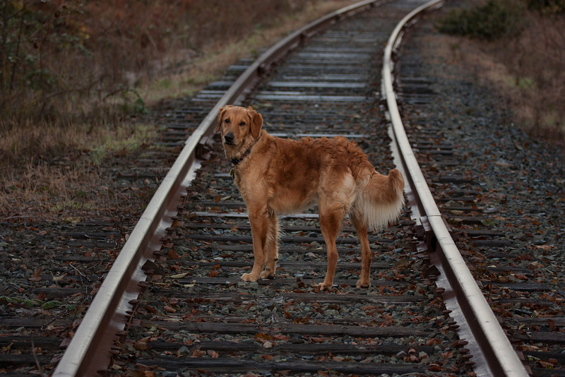 Enzo and the Railroad Tracks