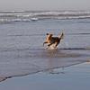 Enzo in Ocean