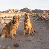 Desert Dogs: Mia and Enzo in Yuma, AZ