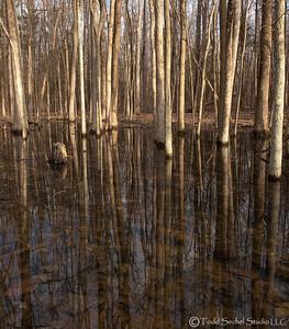 Findley State Park (0134) - Wellington, Ohio