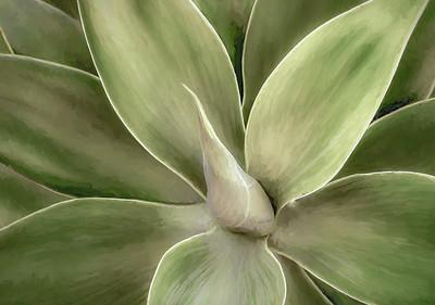 Century Plant #2