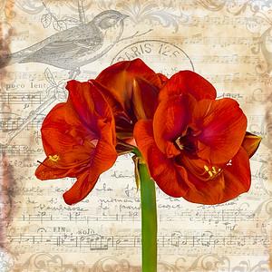 Amaryllis with Music & Bird