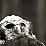 Owl for Noreen - Nature Photography :