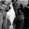 Big fish caught off the shore at Dutch Harbor, Unalaska in the Aleutian Islands. My dad, Emon Perdue is in the center.