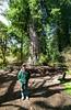 Steve H Jay at Big Tree in Prarie Creek State Park