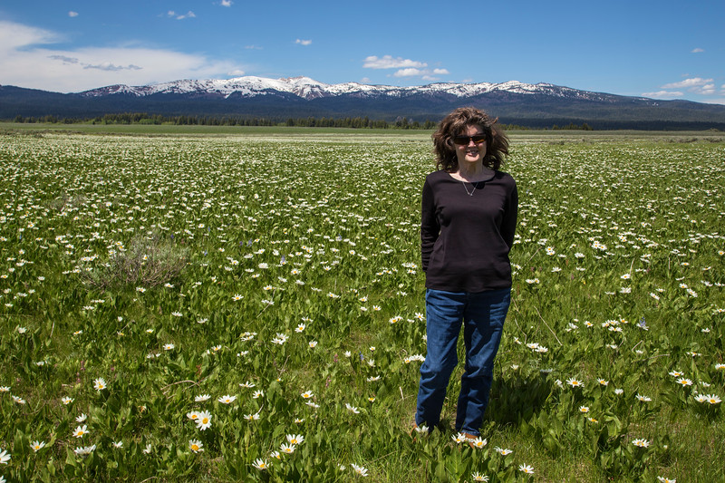 Donna D Perdue and Mule's Ear Wildflowers, Idaho