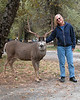 Not Recommended: Tourist in Yosemite poses with wild male deer.