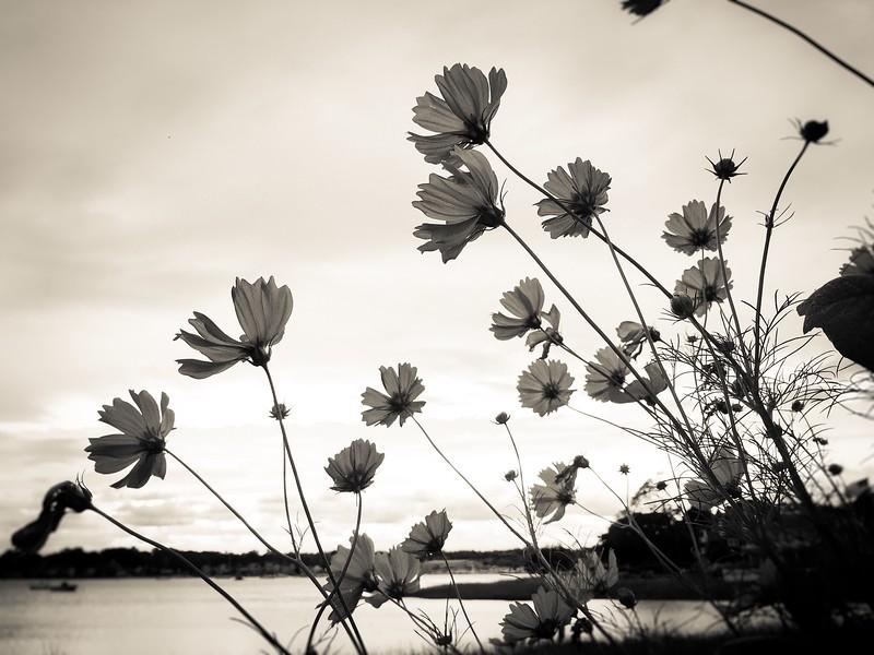 Marvin Beach Flowers