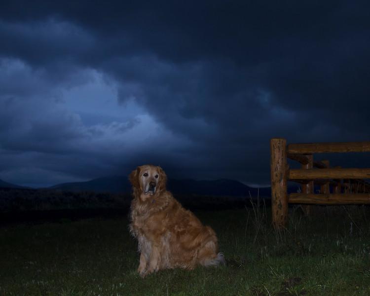 Reggie, my golden retriever dog, after storm passes at RedRock RV Park in Island Park, Idaho.June 2, 2010.
