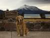 Reggie poses at an overlook of Shasta Volcano in Northern California. October 2010.
