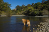 Reggie at age 10.5 years along the Russian River in Northern California. One of our many trips we took together exploring. I'm looking for good photographs and he's collecting new smells. Nov 5, 2010