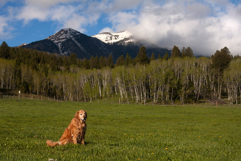 Reggie with East Centennial Mountains of Idaho in the background. June 10, 2010. Today is Reggie's 10th birthday.