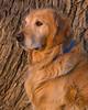 Reggie in North Carolina. April 2009
