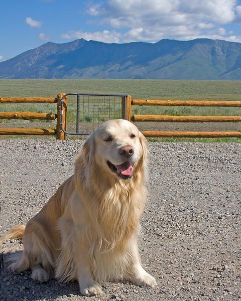 Carson, a beautiful blonde Golden Retriever male, visited Reggie at RedRock RV Park in Island Park, Idaho. July 28, 2009