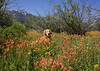 Reggie and the Indian Paintbrush in Centennial Valley, Idaho. July 11, 2008.