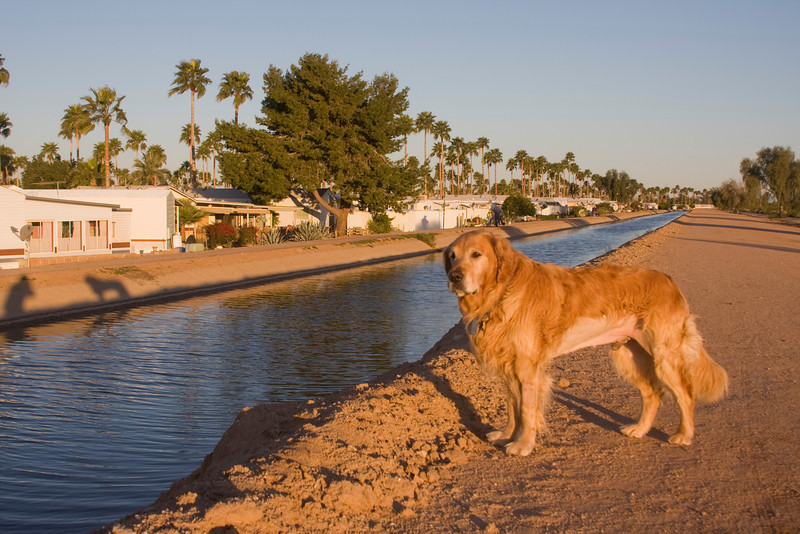 """Notice the shadow of me and Reggie as I was taking his photo on the canal bank in Mesa Az. Notice Reggie's """"cut"""" after his surgery. Feb 25, 2009."""