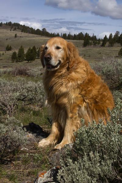 Reggie at the Continental Divide (between Idaho and Montana) along Red Rock Road. May 31, 2010.