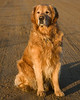 """Reggie on a morning walk Jan 2008. Afterwards, he ran up to me begging for his traditional """"photo tax"""" biscuit."""