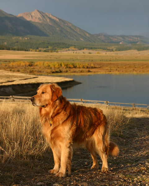 Reggie at Henry's Lake with Red Rock Mountain the background at Sunrise, August 2006.