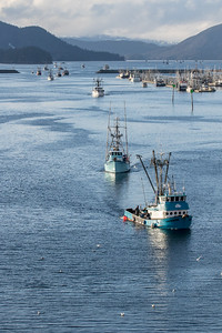 Sac Roe Herring fishery fleet returning.