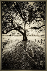 A Tree in a Graveyard