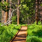 Sequoia Memorial Day 2009 :