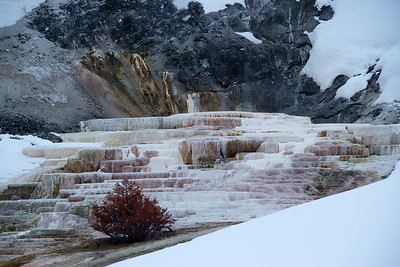 Winter, Yellowstone National Park, WY