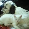Skipper & Cleo
