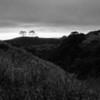Distant Trees