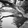 Tree and Bridge