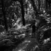 In the Woods - Poppa's Bushwalk