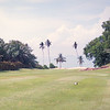 6th Hole - Palm