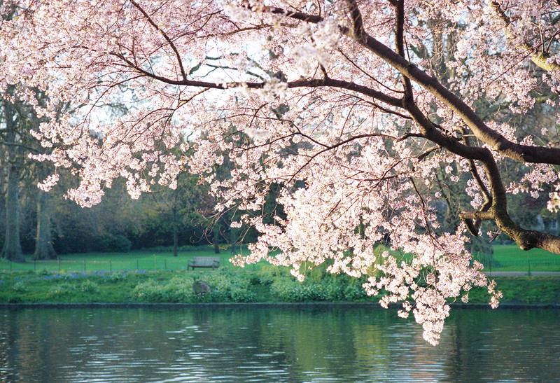 Spring at St. James's Park
