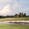 9th Fairway - Palm Course