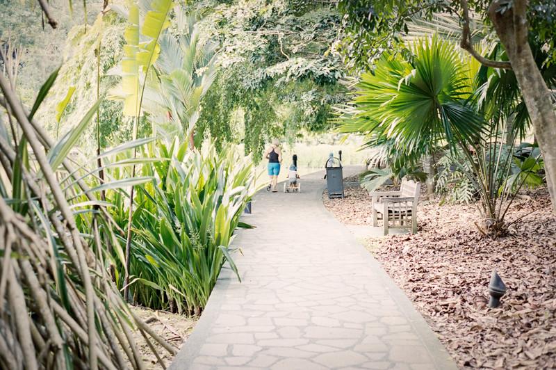 Singapore Botanic Gardens | June 2017