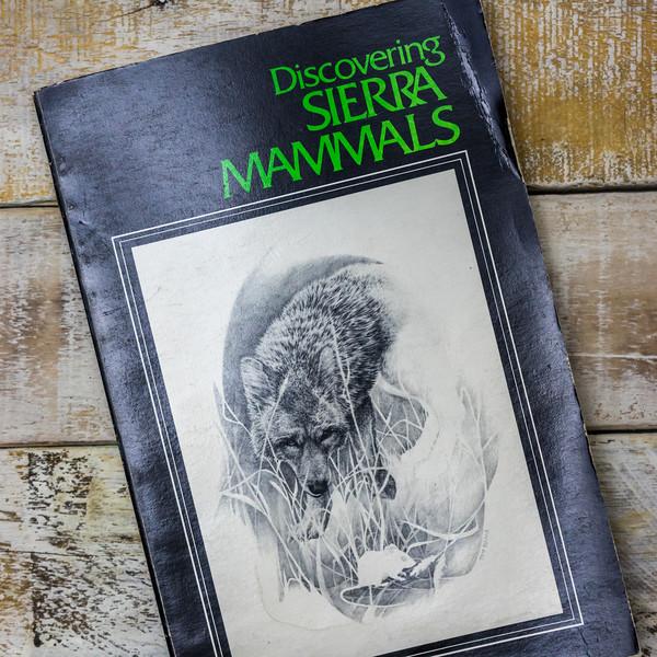 discovering-sierra-mammals-5379.jpg