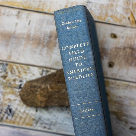 Complete Guide to American WIldlife— Collins