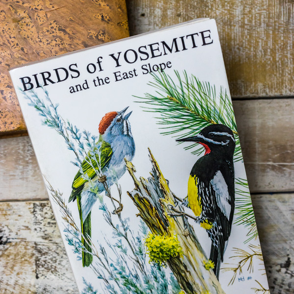 birds-of-yosemite-5251.jpg
