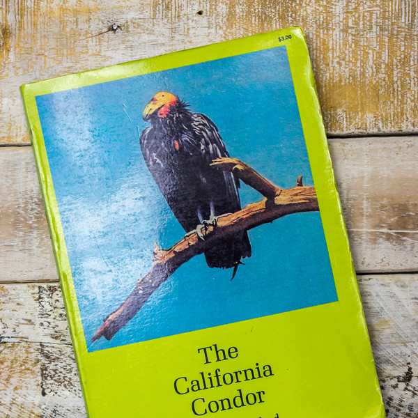 the-california-condor-5383.jpg