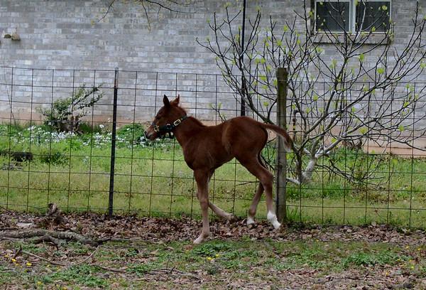 SCHEXNAIDER HORSE FARM 3-23-13