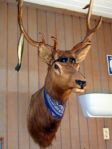Deer Head Mount with Fishing Lures Hanging From the Horns,   Winthrop, Washington State. Client: Stock Photography Agency. SV100106
