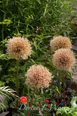 The Moore Garden_0246